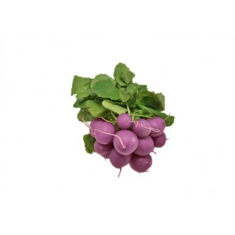 Graines de Radis Rond Violet Malaga