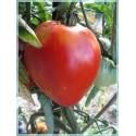 Graines de Tomates Coeur de Boeuf d'Antan (Malinowy Retro)