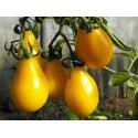 Graines de Tomates poires jaunes
