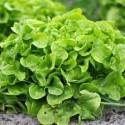 salade de balcon
