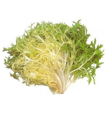 salade frisée (endive)