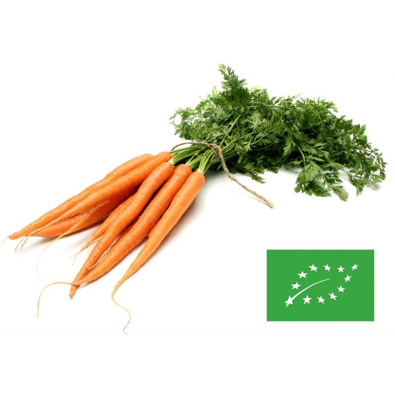 af04f39a4d987 Graines de légumes - semences de légumes - Potageons