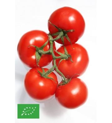 graines BIO de Tomates