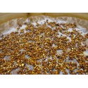 graines germées de Moutarde