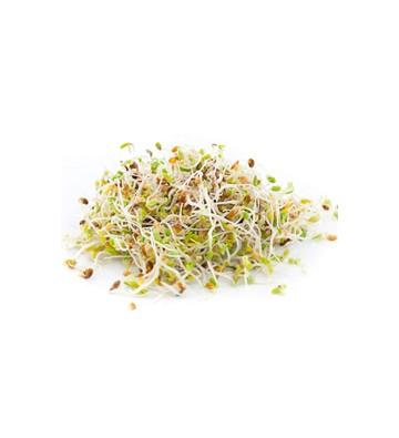 graines germées Vitaminées